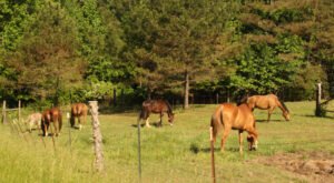 Mounted Patrol in pasture