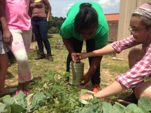 Students work in the school gardens both during and after school.