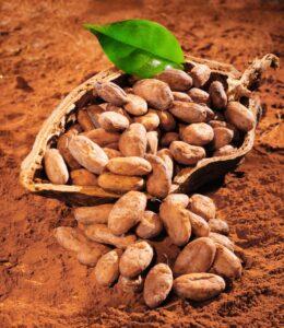 cacaopod+beans+powdershutterstock_96107318