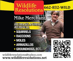 Wildlife_onlinead