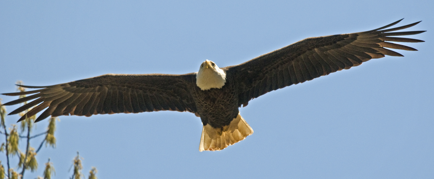 UPDATE: Bald Eagle Survey Re-Scheduled for February 6 at Sardis Lake ...