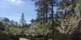 birmingham-botanical-gardens.jpg