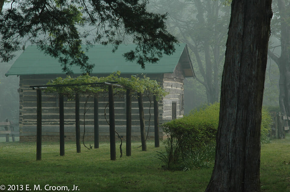 """Muscadine Arbor"" Photo by Ed Croom, Jr."