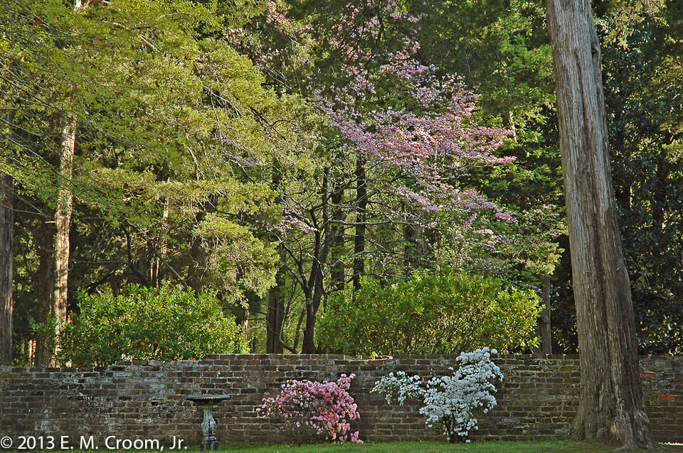 """A Brick Wall in April"" Photo by Ed Croom, Jr."