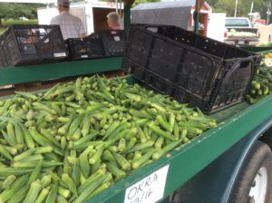 Fresh okra are a true Southern staple.