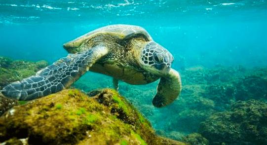 Courtesy of Sea World.