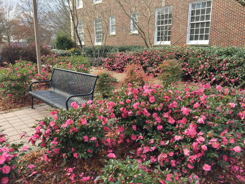 landscaping-camp-something-is-always-blooming-on-campus-even-in-the-winter