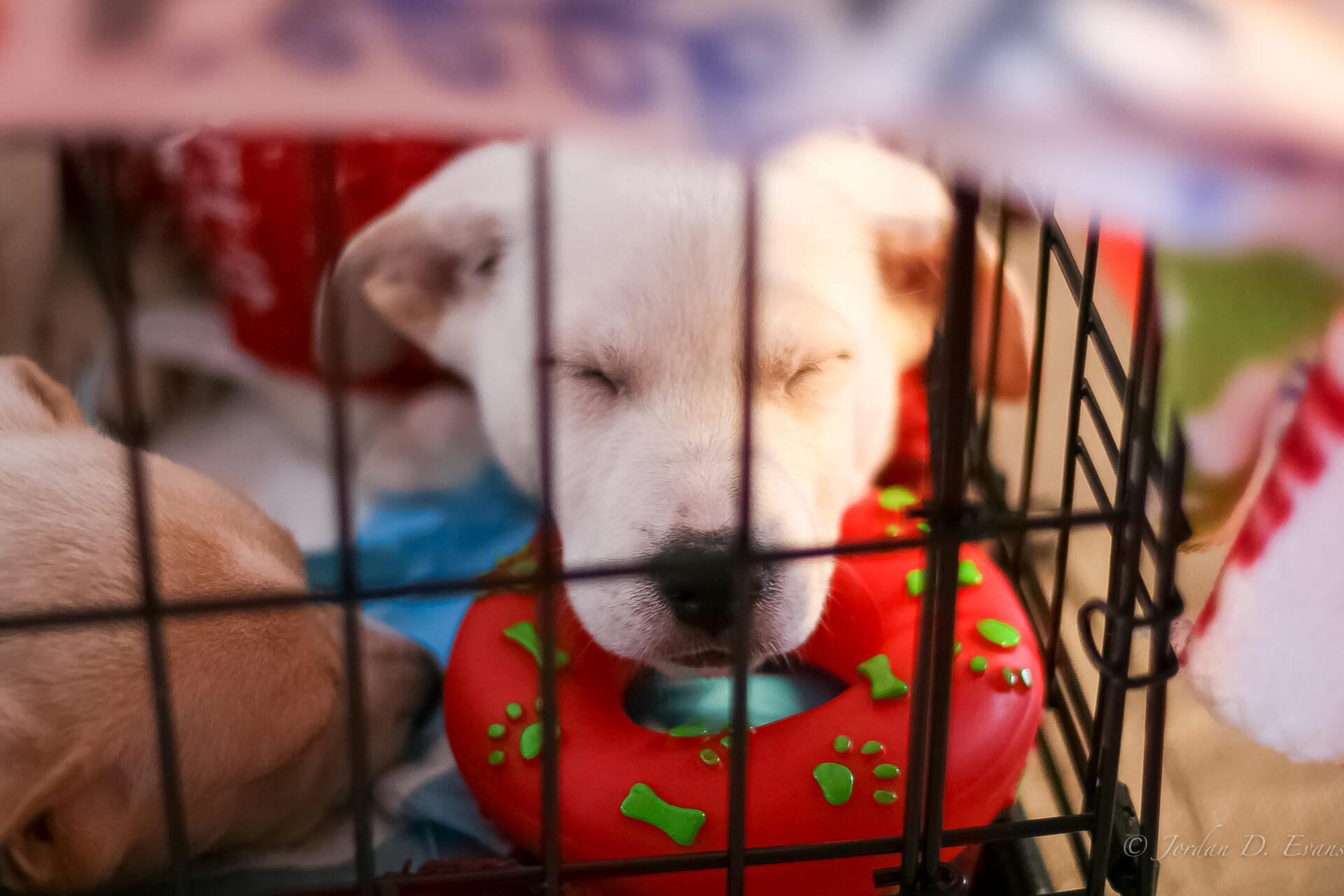 Mississippi Mutts puppy