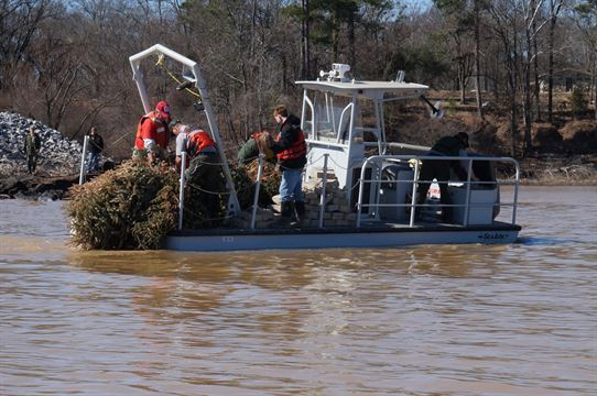 Christmas Trees Can Serve Another Purpose